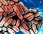 Magyar kutatók pörgették fel az olajfaló baktériumokat