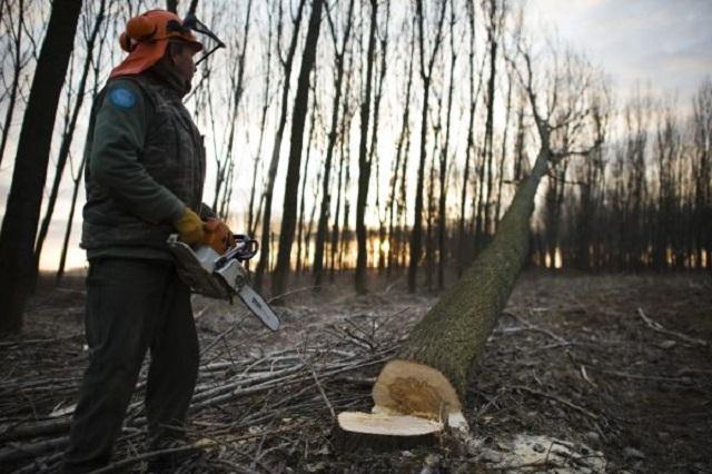 Az összes állami erdészet nyereséges volt tavaly
