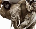 Pakold rá az elefántot - Land Rover mobiltelefon