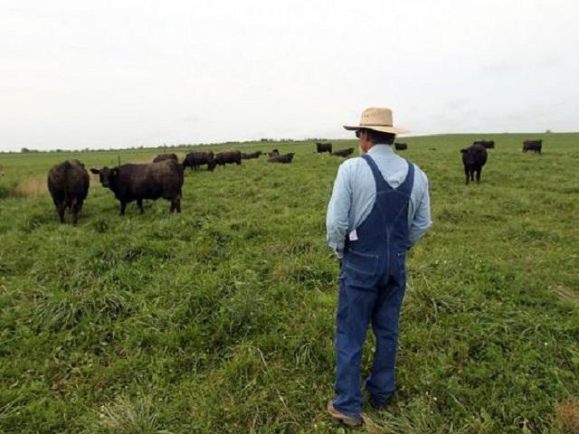 Tömegével ölik meg magukat az amerikai farmerek