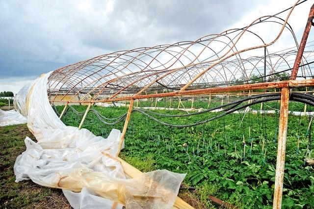 Csődközelbe kerültek a fóliasátras termelők a szélvihar miatt