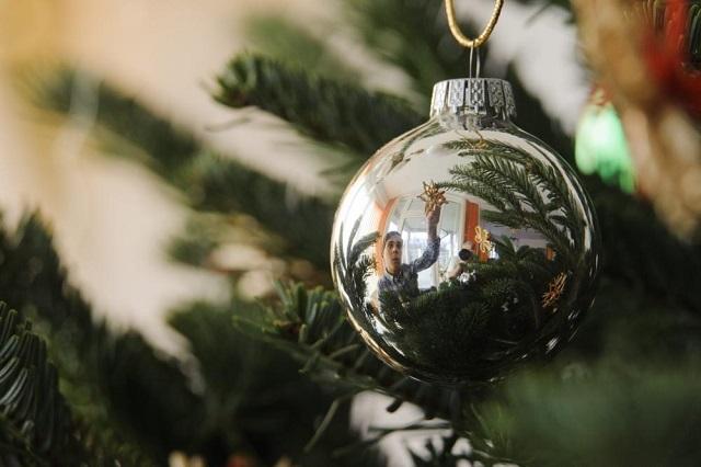 Egy brutális, tököli ezüstfenyő lesz az ország karácsonyfája