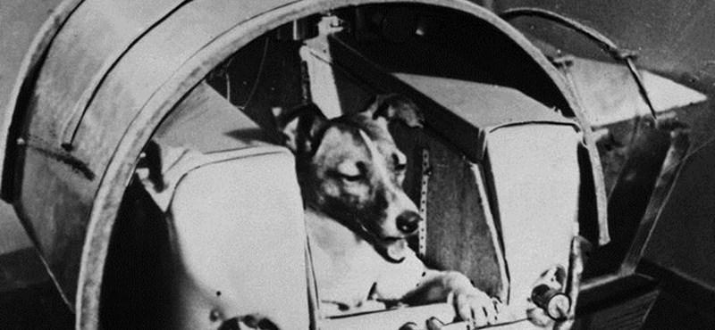 60 éve indult az űrbe az asztronauta-kutya