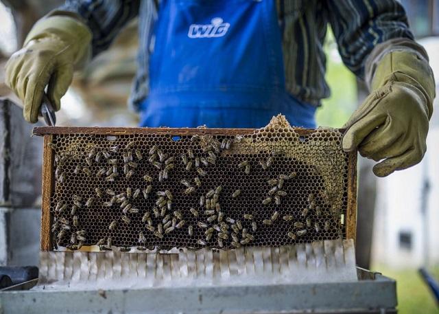 Csak a megtermelt méz 35 százalékát tudjuk eladni az EU-ban
