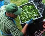 Olcsóbb lett a mezőgazdasági munkások foglalkoztatása