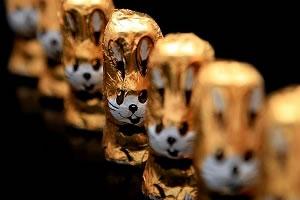 Csúcsra járatják a csokinyuszik gyártását