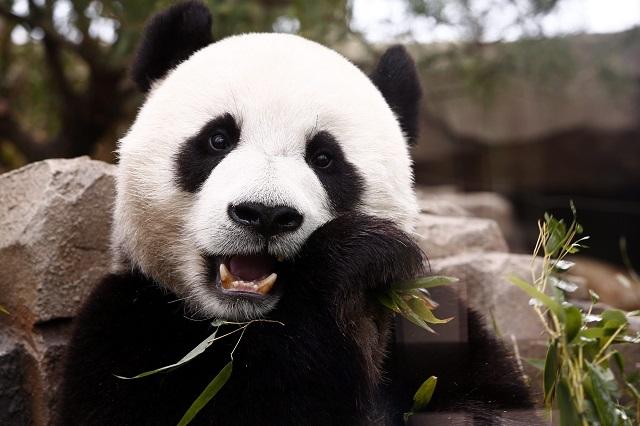 Megint jönnek a panda kötvények