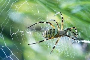 Pókok miatt kell visszahívni Suzukikat az USA-ban