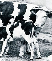 Mindenki védi a maga tejét