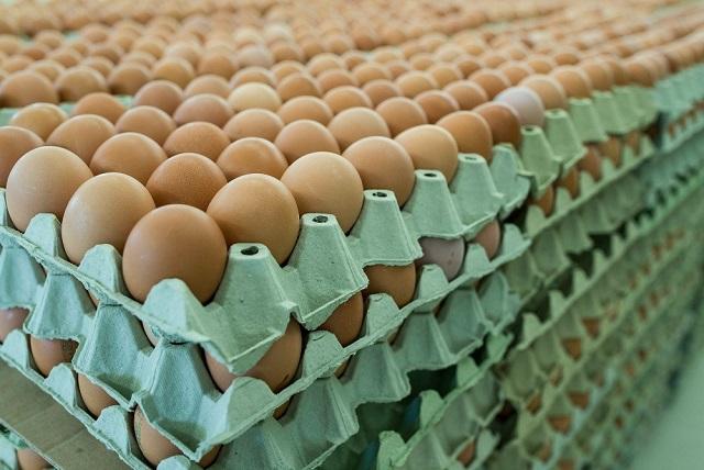 10,7 millió darab került a mérgező tojásokból Németországba