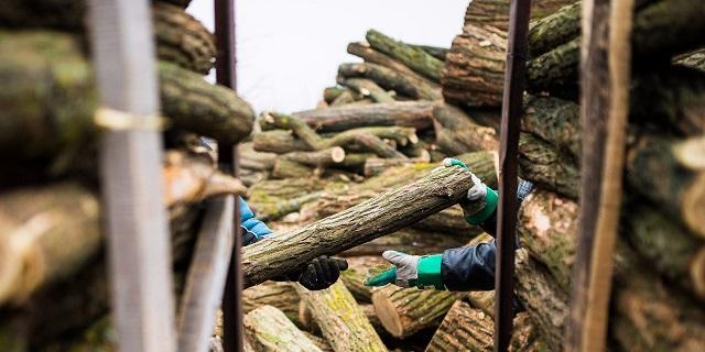Több százmilliós kárt okoztak a bűnöző fakereskedők