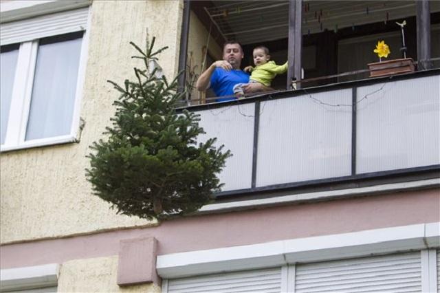 Félmillió karácsonyfát dobnak ki Budapesten